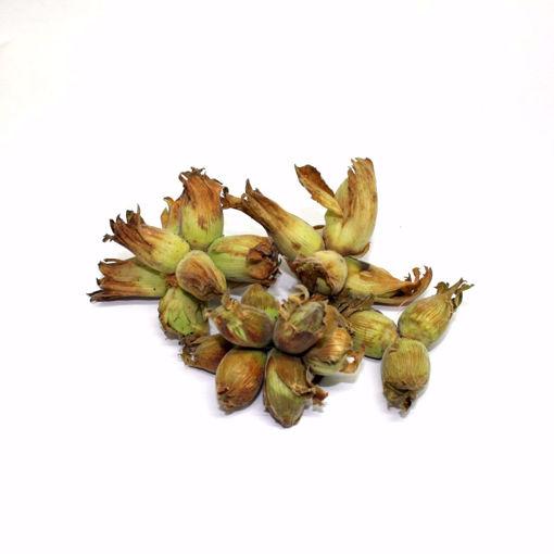 Picture of Fresh Hazelnuts 500Gr