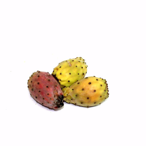 Picture of Prickly Pear 4 Pack