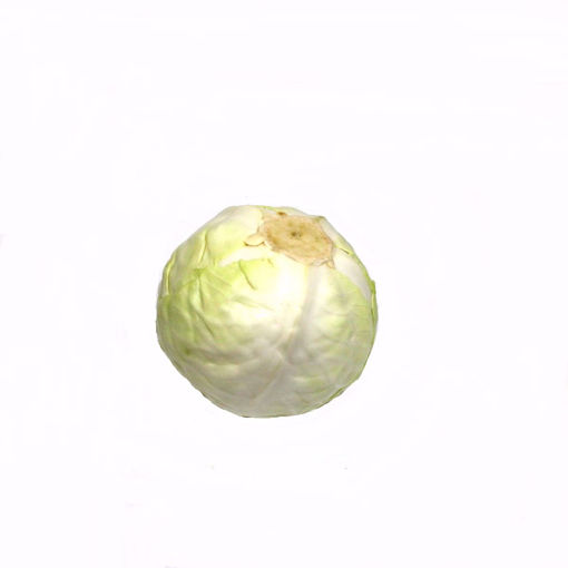 Picture of White Cabbage Single (Min. 1.190Gr)